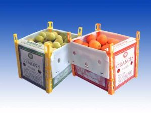 PP Turnover Fruit Box pictures & photos