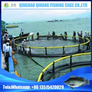 Floating Fish Farming Cage with Installing Service pictures & photos