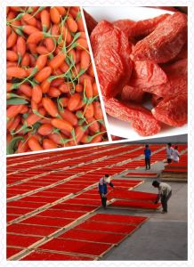 Red Diamond-Ningxia Superfood Gojiberry