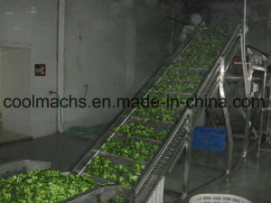 Broccoli Quick Freezing Production Line/Vegetable Processing Line pictures & photos