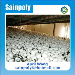 Low Cost Plastic Film Agricultural Mushroom Greenhouse pictures & photos