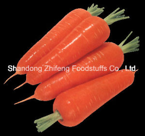 300-350g New Crop Chinese Fresh Carrot pictures & photos