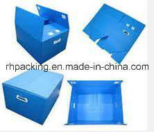 PP Polypropylene Fruit and Vegetable Plastic Carton Coroplast Box Manufacturer pictures & photos