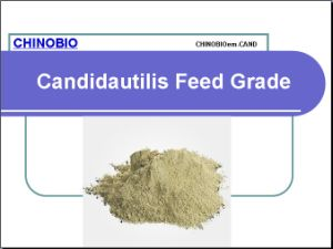Feed Grade Candida Utilis Animal and Poultry Feed Additives