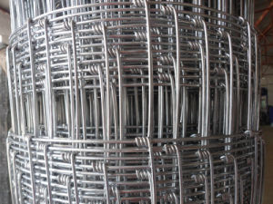 China Supplier of Galvanized Field Fence with High Quality Cheap Price pictures & photos