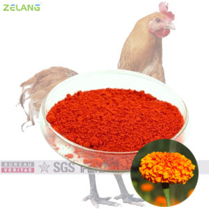 Marigold Extract in Poultry Feed