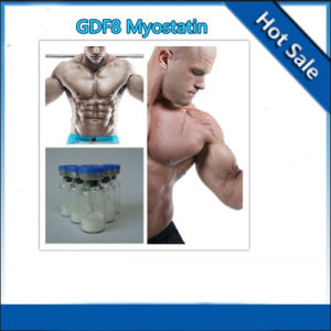 Pharmaceutical Peptide/Anabolic Myostatin/Gdf-8 for Muscle Growth