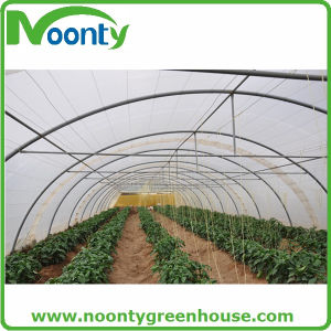 Cheap Single Tunnel Plastic Greenhouse