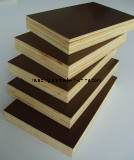 Finger Joint Film Faced Plywood/Finger Joint Ffp pictures & photos