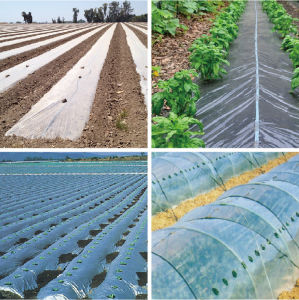 Agriculture Black Plastic Film Transparent Film Transparent PE Film pictures & photos