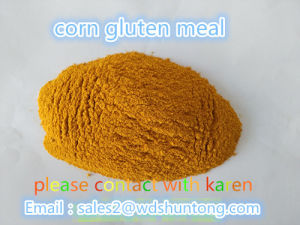 Corn Gluten Meal for Fodder with High Quality