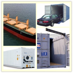 Consolidate Lowest Price Special Container From China to Africa