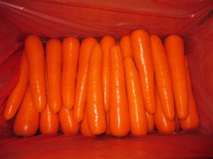 Carrot pictures & photos