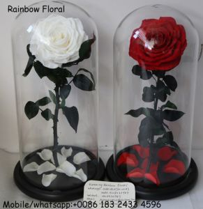 Everlasting Rose in Glass Dome Wholesale From Yunnan at Reasonable Price