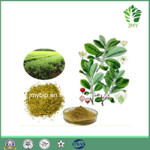 Weight Loss Yerba Mate Extract 10%~20% Polyphenols 5: 1~20: 1