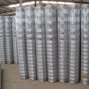 Hot Dipped Galvanized PVC Wire Mesh Fixed Knot Fence