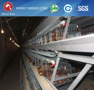 Farm Machinery Chicken Bird Cage with Low Price and High Output pictures & photos