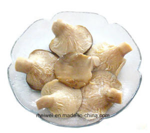 Canned Abalone Mushroom with Best Price pictures & photos