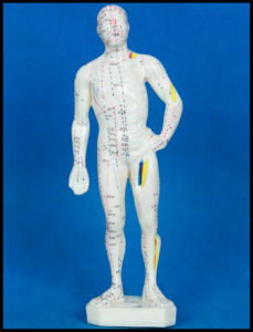 Acupuncture Human Body Model (M-1-26) pictures & photos