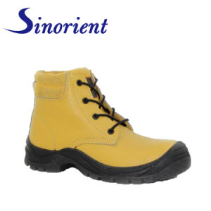 hammer safety shoes price