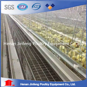 High Quality and Low Price Automatic Design Pullet Chicken Cage
