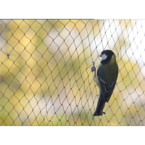 100% Virgin Anti Bird Plastic Net for Fruit Cage Netting pictures & photos