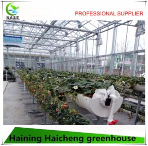 Multi Span Commercial Glass Greenhouse for Flower