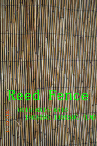 Reed Fence - 3