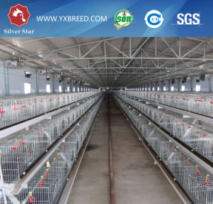 Chicken Layer Cage and Poultry Equipment Supplier Manufacturer pictures & photos