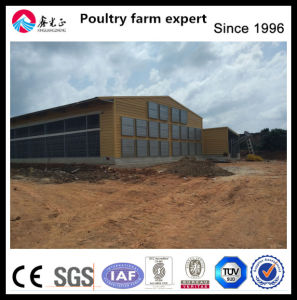 China Direct Factory Layer House and Equipment