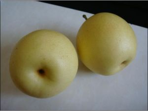 Grade a Fresh Crown Pear Hot Sale in China pictures & photos