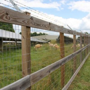 Agriculture Animals and Livestock Cattle Fence