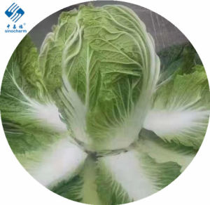 Sinocharm Brc a Approved IQF Chinese Cabbage Cut Frozen Chinesecabbage