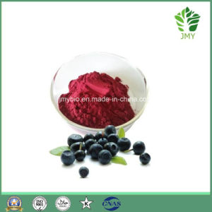 Best Quality Acai Berry Extract Amino Acids, Proanthocyanidins 60%