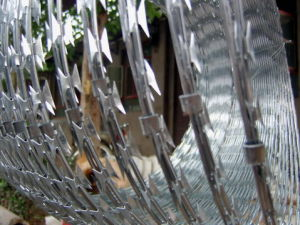 Razor Wire pictures & photos