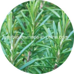 Natural Rosemary Extract, Carnosic Acid 60%, Rosmarinic Acid 98% pictures & photos