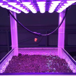 4 Channel LED Light Module for Lab Plant Factory Germination pictures & photos