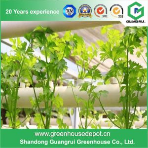 2017 Multi-Span Glass Water Saving Green House on Sale pictures & photos