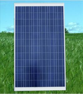 185wp Poly Photovolatic Solar PV Panel (WHS-968)