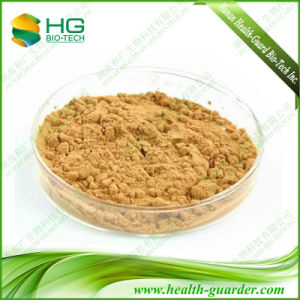 Goji Berry Powder Extract Chinese Wolfberry Extract
