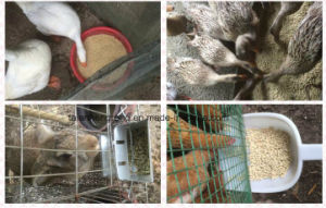 Pellet Feed Mill pictures & photos