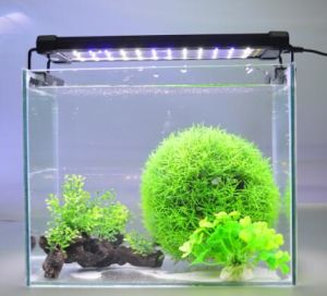 China Zjl 100a Aquarium Accessory Dimmable Led Clip Light With Freshwater China Lightings Light