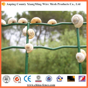 High Quality Plastic Coated Holland Wire Mesh / Euro Fence (XM-EURO) pictures & photos