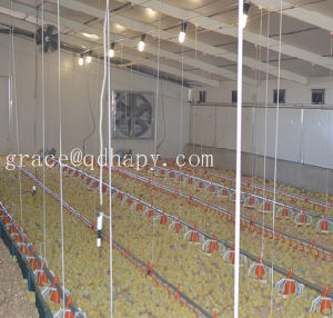 Environment Controlled Poultry Farm Equipment for Broiler Production pictures & photos