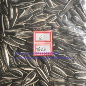 601 Type Raw Sunflower Kernel Top Quality