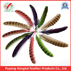 Wholesale Beautiful Natural Pheasant Feathers