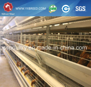 Chicken Layer Cage Automatic System for Zambia pictures & photos