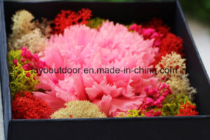 New Design Good Quality Preserved Roses Big Size in Glass Preserved Fresh Flowers pictures & photos