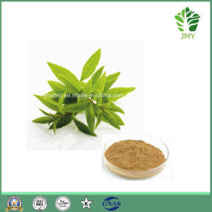 Weight Loss Lemon Verbena Extract 12: 1; 20: 1 pictures & photos