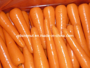 New Harvest Fresh Carrot pictures & photos